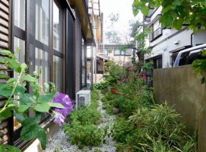 南西側のお庭。売主様が植えたハーブがたくさん取れます。