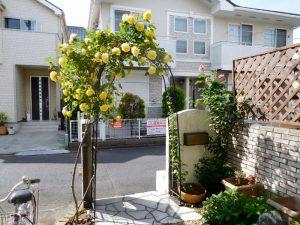 玄関前のバラのアーチ